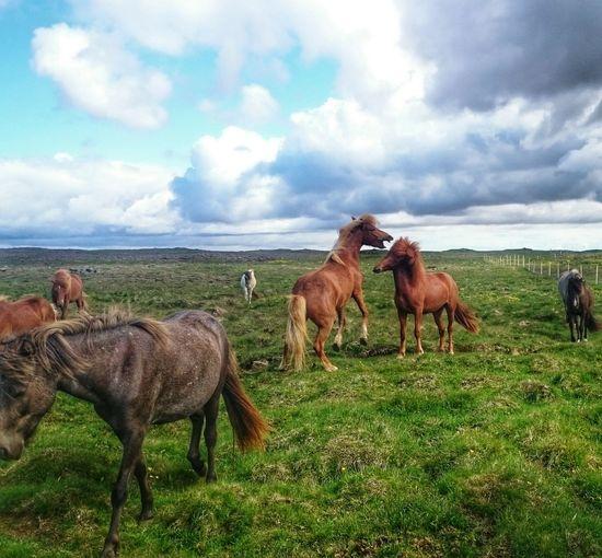 Capturing Freedom I Love Horses Enjoying Life Taking Photos