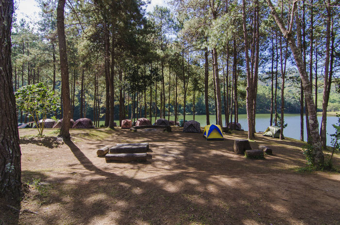 Camping Forest Mae Hong Son Maehongson Nature Outdoors Pang Ung Park Thailand WoodLand ปางอุ๋ง แม่ฮ่องสอน
