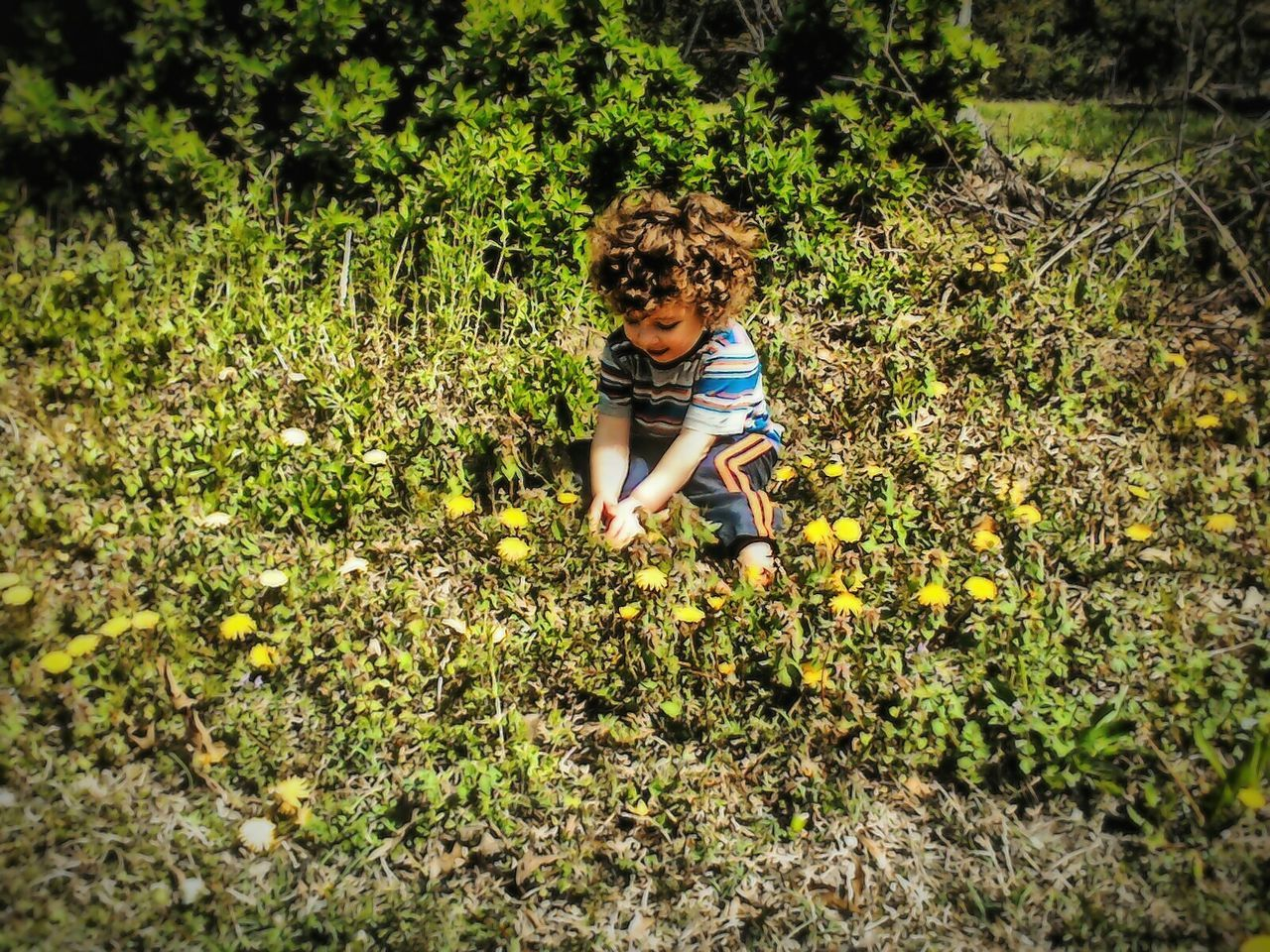 childhood, growth, real people, one person, plant, nature, full length, leisure activity, field, day, boys, casual clothing, flower, outdoors, elementary age, lifestyles, beauty in nature, curly hair, grass, tree, freshness, people