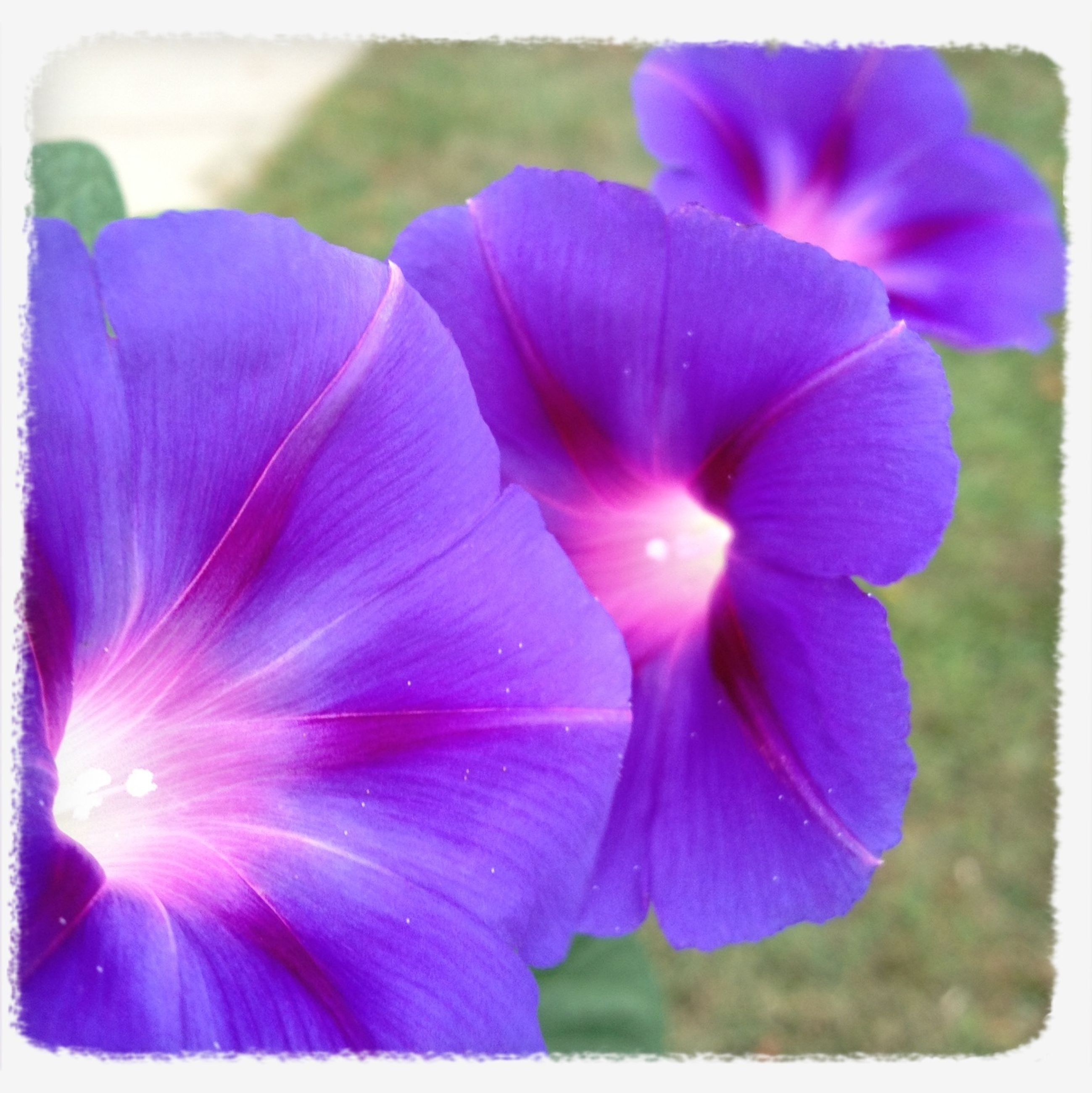 flower, petal, freshness, purple, flower head, fragility, beauty in nature, growth, close-up, nature, blooming, focus on foreground, transfer print, plant, auto post production filter, in bloom, stamen, single flower, blossom, pink color