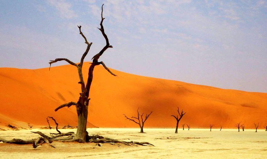EyeEm Selects Namibia Sossusvlei Dead Vlei Desert Sand