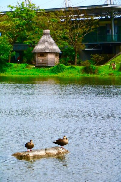 🦆🦆🏠 EyeEm Animal Themes Animals In The Wild Bird Water No People Day Outdoors Nature Beauty In Nature Tree Lake