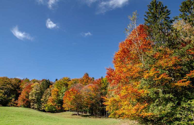 Scenic view of autumnal trees against sky