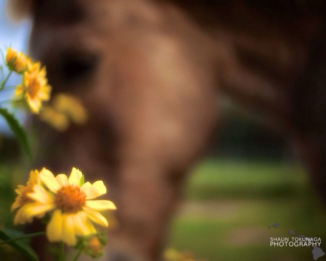Daisy Dreams Horse Flower EyeEm Nature Lover