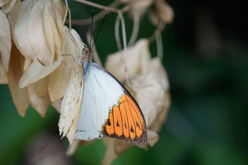 Butterfly Antenna Wildlife Flower Head Wild Animal Animal Antenna Single Flower Animal Wing Blooming Pink