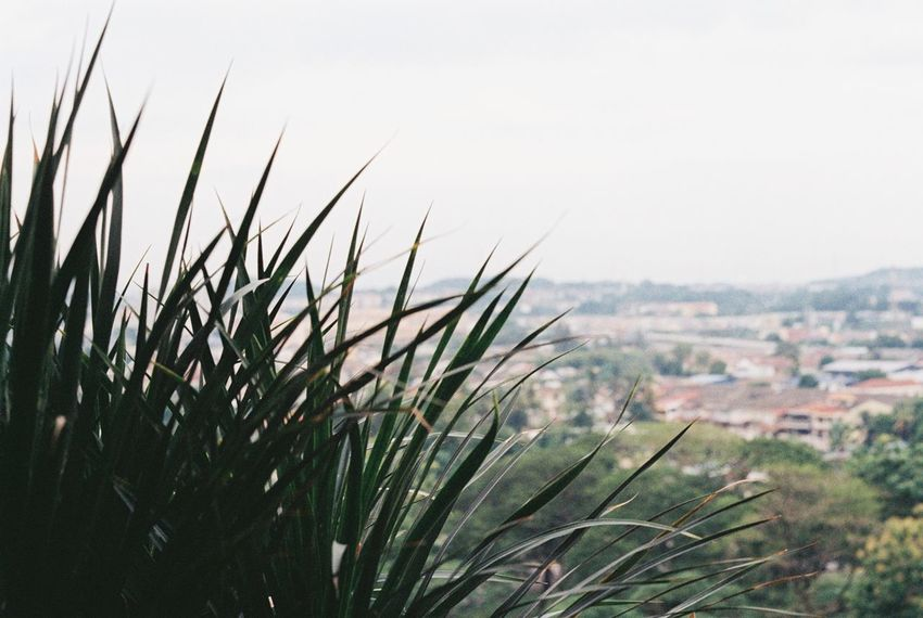 35mm Believe In Film Film Photography Filmcamera Analogue Photography Shootfilmnotmegapixels Plant Apartment Balcony View Urban Landscape Airview Neighborhood Ghetto City