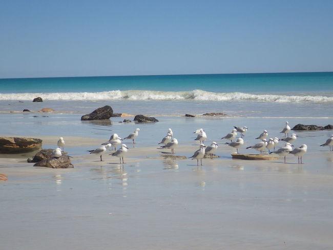 Australia Australian Landscape Travel Travel Photography Amazing Beach Landscape Nopeople Nophotoshop Sea Sky Travel Destinations Travelphotography