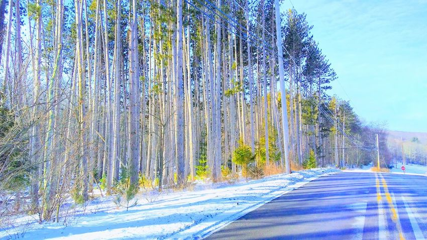 Tree Day Outdoors Snow Nature Sky No People Growth Winter Scenic Drive Beauty In Nature Transportation Close-up Country Road Shadow