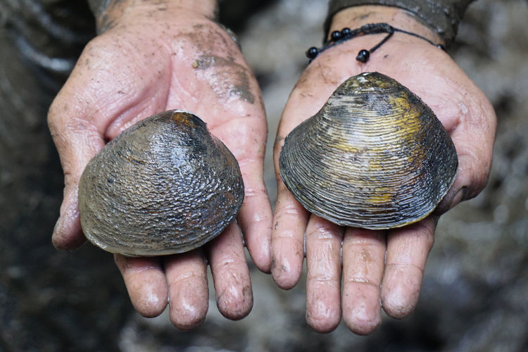 Close-up of dirty human hands holding messy seashells