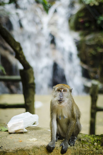 Monkey sitting against waterfall in forest