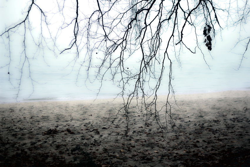 Foggy Day Tree Beach