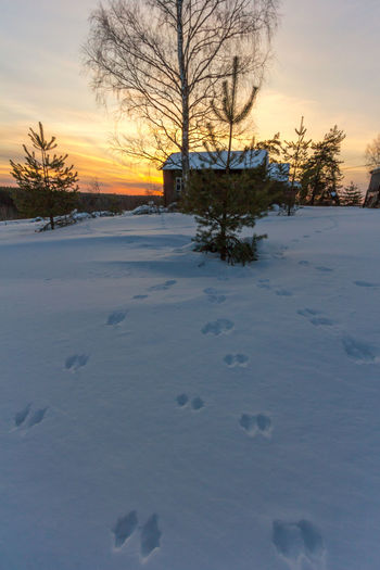 Следы невиданных зверей. Traces of unseen beasts 🐰🦊🐺🐇🐭🐾🐾🐾 Trace Trail Snow Sunset Sunset_collection Tree Beauty In Nature Winter Frost Steps зеленцыно Zelentsino Закат зима мороз снег Россия Russia Country Life