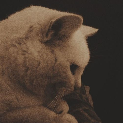 My diva Tábata Cats Vscofilter M5 sepia animals pets profile photography diva sweet cute
