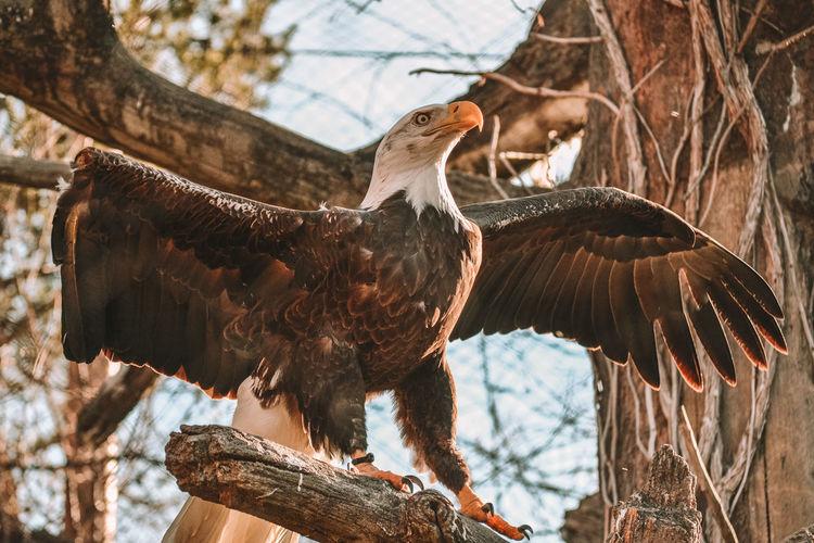 Birds perching on a branch