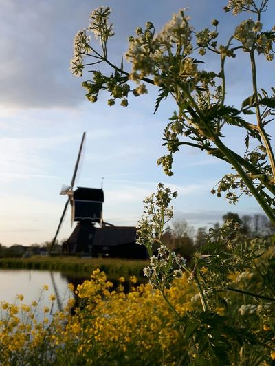 Windmill Tree Water Rural Scene Traditional Windmill Lake Wind Power Branch Sky Architecture