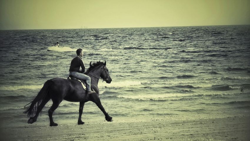 October Day Mamaia Beach Constanta Romania Enjoying Life Beach Life Beautiful Horse Feelings