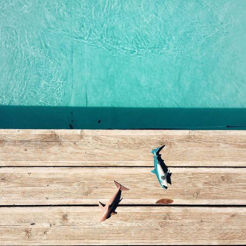 Summer Views Jaws Pool Market Bestsellers July 2016 Market Bestsellers August 2016 Bestsellers