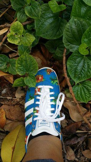Adidas Gazelle Adidas Originals Adorofarm Shoes ♥