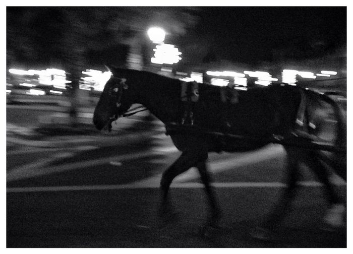 Horse In The City