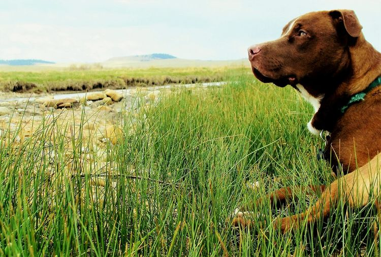 Dog Pets Sky