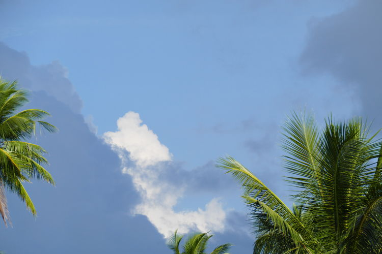 Tree Sky Cloud - Sky Plant Beauty In Nature Low Angle View No People Scenics - Nature Tranquility Palm Tree Tropical Climate Growth Nature Outdoors Day Tranquil Scene Palm Leaf Skyscape