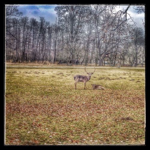 Park Castle Iphonephotography IPhoneography follow-deer in the park