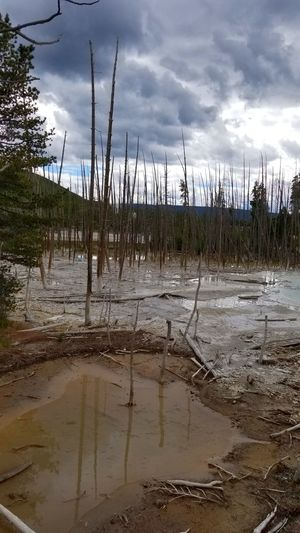 Trees picked the wrong spot to grow Deposits Yellowstone Volcanic Landscape Hot Spring Geyser DYING TREES Water Lake Marsh Swamp Reflection Tree Sky Landscape Cloud - Sky Standing Water
