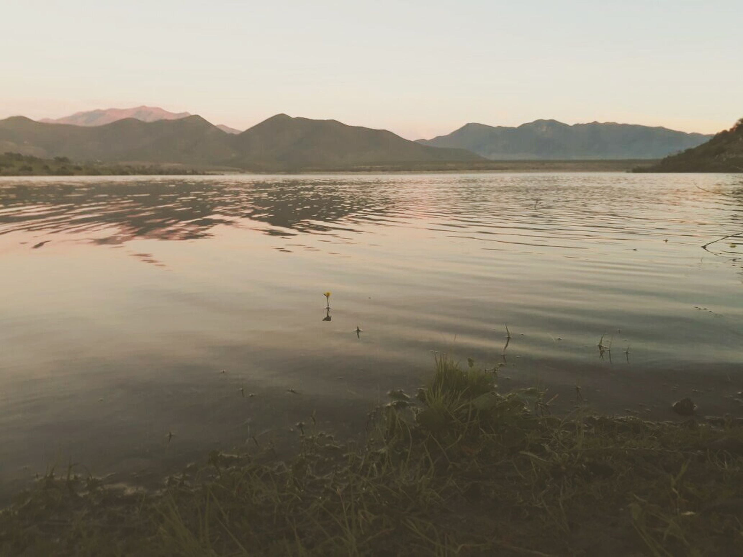 nature, mountain, lake, water, bird, reflection, beauty in nature, tranquility, animals in the wild, sunset, scenics, outdoors, mountain range, tranquil scene, no people, animal themes, sky, swimming, grass, day, clear sky