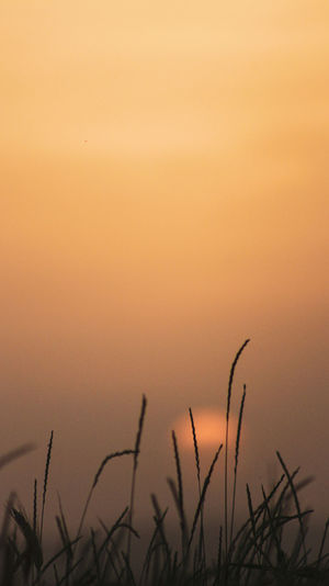 Close-up of silhouette plants on field against orange sky