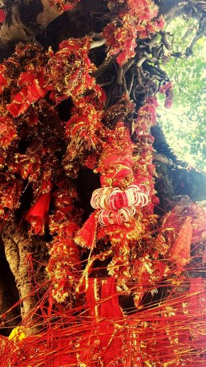 People belive of they tie this holy piece of cloth on this holy tree in the temple their wishes will definitely come true. This picture is capture during a trip to chintapurni mandir (temple) in india. Indiantemple Tree EyeEm Trip Holy Tree Holyplace EyeEm Selects The Week On EyeEm