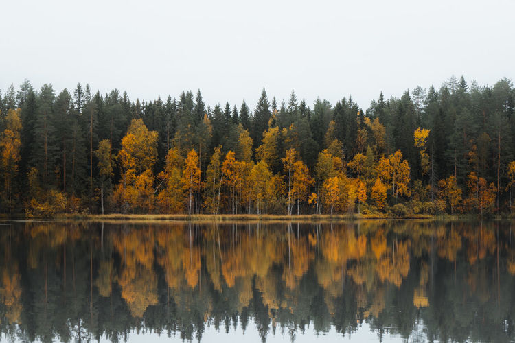 Reflection of autumn trees in lake