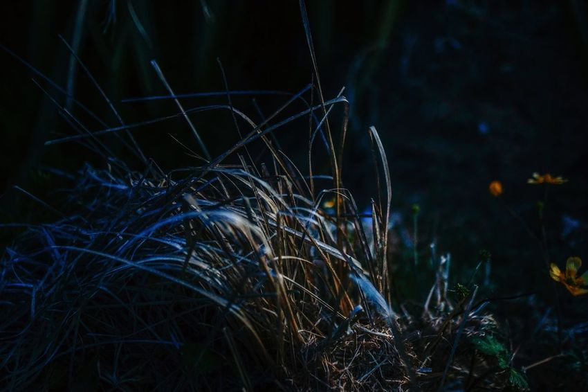 light and shadow Night Plant No People Grass Nature Growth Illuminated Focus On Foreground Dark Close-up Dark Outdoors Eye4photography  EyeEm Best Shots Tranquility Beauty In Nature Light - Natural Phenomenon Forest Glowing Selective Focus Light Getty Images Full Frame Film EyeEmNewHere