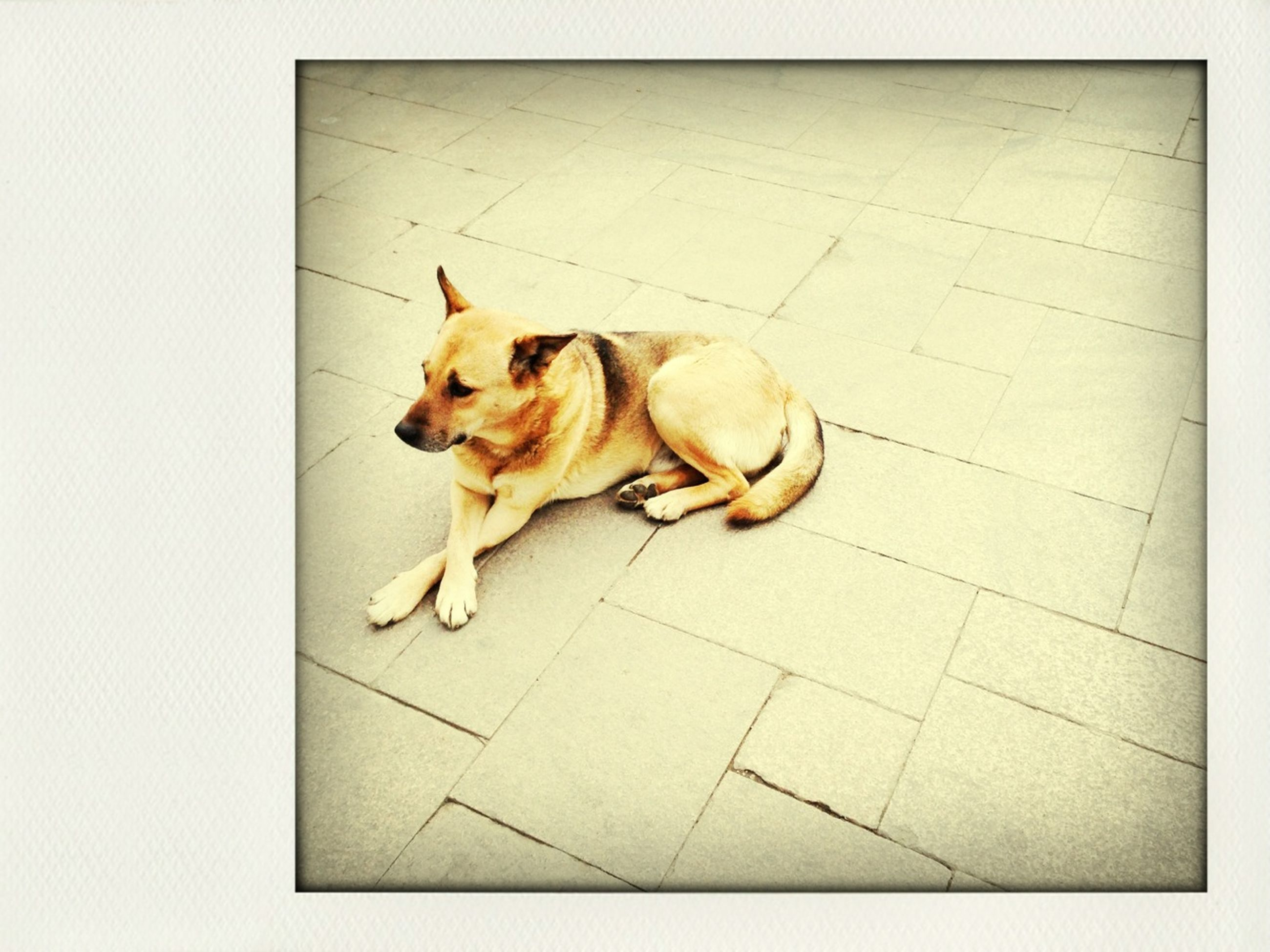 animal themes, domestic animals, pets, one animal, mammal, domestic cat, cat, feline, relaxation, tiled floor, high angle view, full length, lying down, flooring, transfer print, resting, sleeping, auto post production filter, wall - building feature, indoors