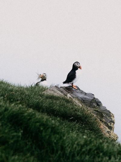 Bird perching on a land