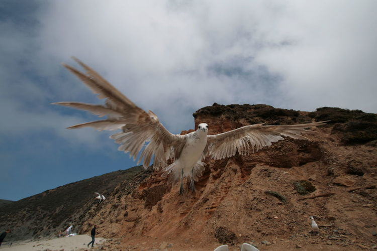 Seagull Flying At Beach By Mountains Against Sky