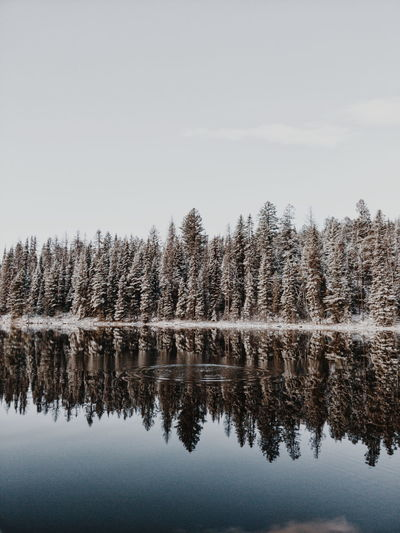 OnePlus Oneplus Oneplus 5 Tree Water Winter Lake Reflection Sky Snow Covered Reflection Lake Pine Tree Tranquility Tranquil Scene Evergreen Tree Calm My Best Photo