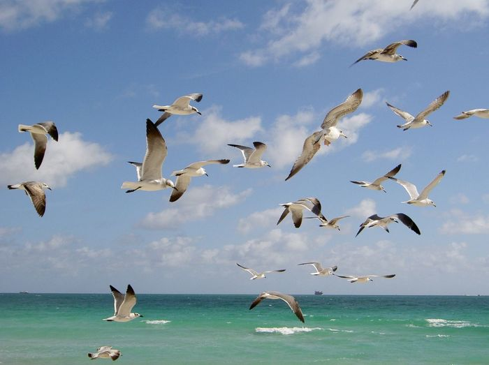 Birds Flying Over Calm Sea Against The Sky