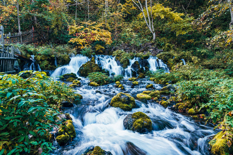 Daisetsuzan Tree Water Forest Plant Motion Beauty In Nature Flowing Water Scenics - Nature Blurred Motion Land Long Exposure Waterfall Nature Rock Rock - Object Solid No People Day Environment Stream - Flowing Water Flowing Outdoors Rainforest WoodLand Falling Water