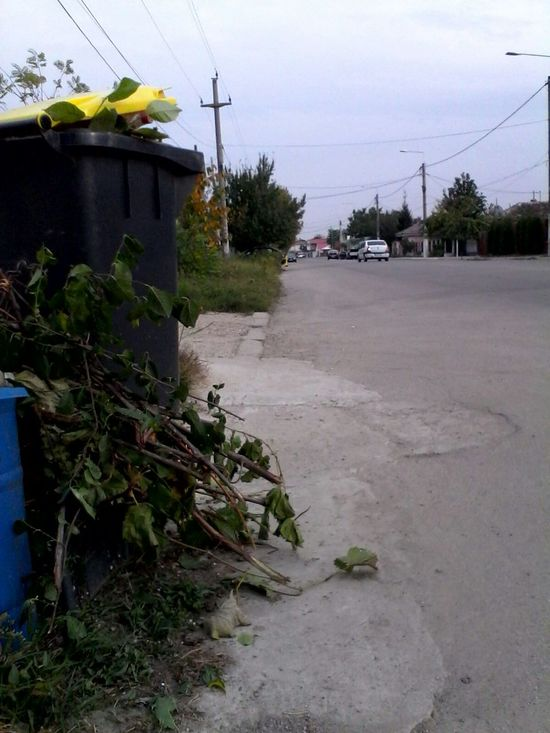 Green Branches Wolfzuachis Garbage Eyeem Market Garbage Disposal Street Street Photography