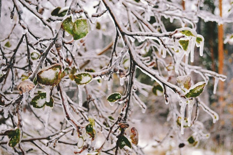 Close-up of twigs in winter