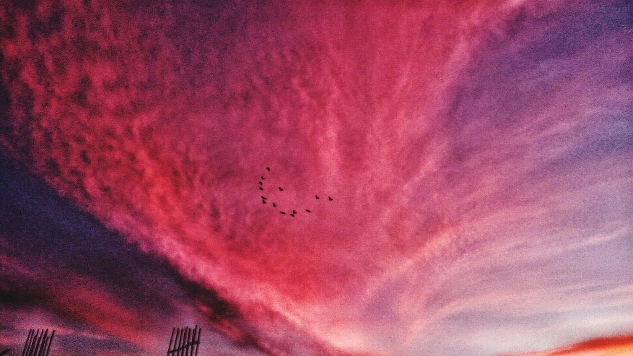 bird, flying, sky, animal themes, low angle view, wildlife, animals in the wild, flock of birds, sunset, large group of animals, no people, nature, animal wildlife, cloud - sky, outdoors, mid-air, beauty in nature, spread wings, day