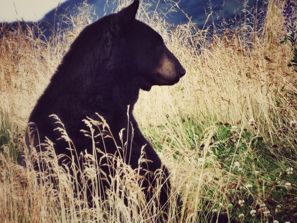Nature Photography EyeEm Nature Lover Outdoor Photography Closeupshot Risktaker Bear Out In The Wilderness