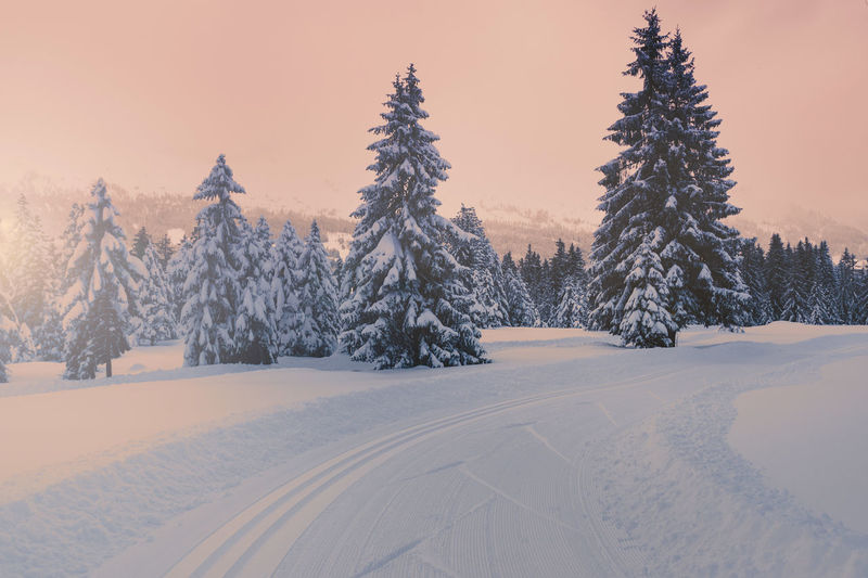 December Exploring Wintersport Adventure Beauty In Nature Cold Temperature Crosscountry Skiing Day Landscape Nature No People Outdoors Pine Tree Scenics Sky Snow Switzerland Track Tranquil Scene Tranquility Tree Winter Xcskiing Shades Of Winter
