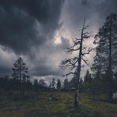 Dead Tree,