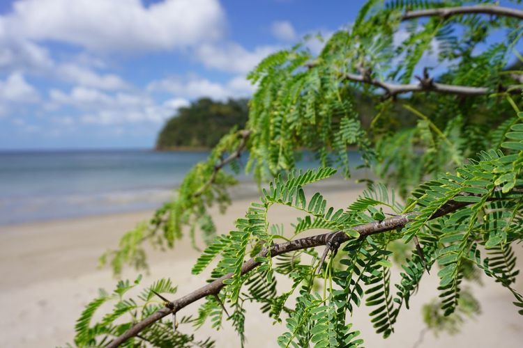 Growth Nature Sky Sea Water Focus On Foreground Beauty In Nature No People Beach Tree Green Color Outdoors Close-up Plant Tranquility Day Cloud - Sky
