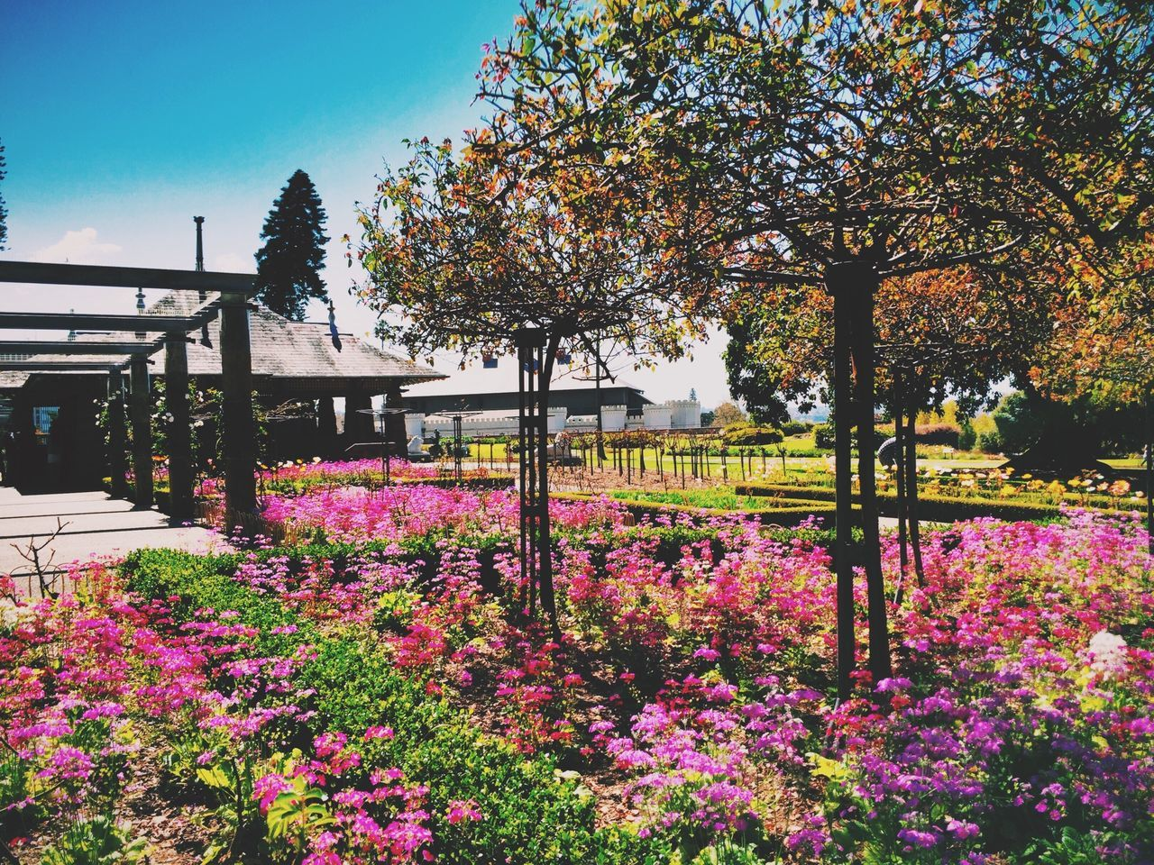 flower, tree, beauty in nature, nature, growth, outdoors, fragility, day, springtime, freshness, no people, plant, blossom, park - man made space, tranquility, tranquil scene, built structure, scenics, blooming, architecture, sky, clear sky