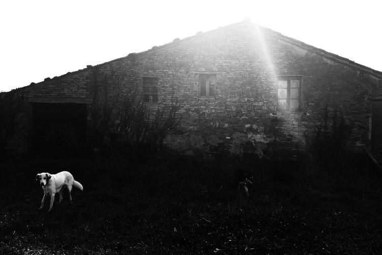 NEM Black&white NEM Mood NEM Memories NEM Silence IPhoneography Provoke Camera Black & White NEM Good Karma The Great Outdoors - 2015 EyeEm Awards The Moment - 2015 EyeEm Awards