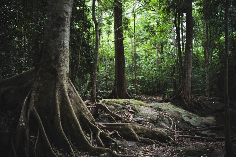 forest Tree Plant Forest Tree Trunk Trunk Growth Land WoodLand Tranquility Nature Beauty In Nature No People Scenics - Nature Outdoors Day Tranquil Scene