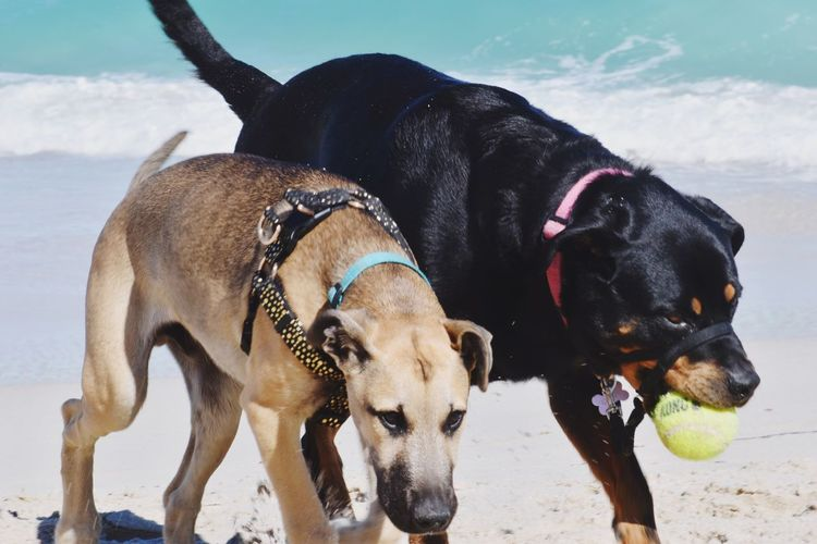Two dogs on land