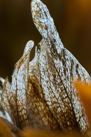 Japan Tokyo Animal Animal Body Part Animal Eye Animal Head  Animal Scale Animal Themes Animal Wildlife Animals In The Wild Brown Close-up Focus On Foreground Indoors  Nature No People One Animal Pattern Reptile Selective Focus Snake Vertebrate